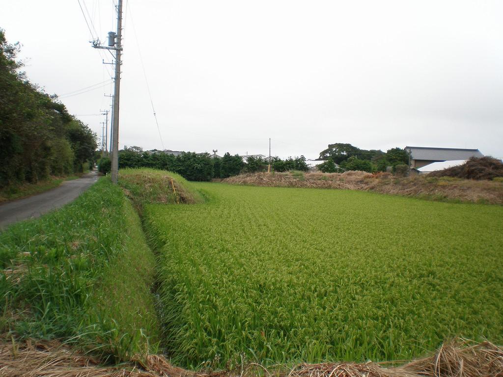 掘り下げ田 (1)
